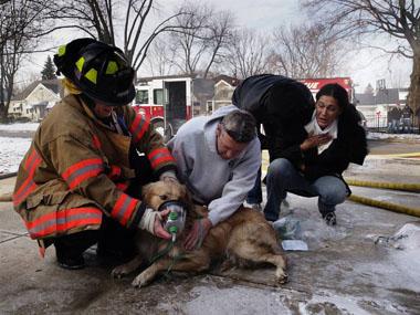 Escautpont : un chien coincé sous une voiture !