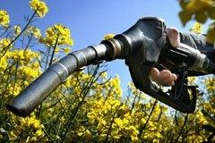 Les déclarations alarmistes se multiplient pour condamner les biocarburants qui enlèvent le pain de ...